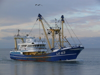 "ex. LE 63 ""Martin Michiel"" sold out of offshore back to fishing industry"